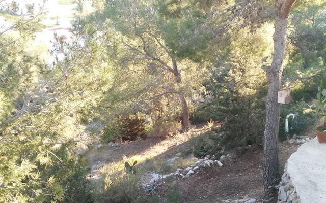 Beautiful plot in Las Salinas