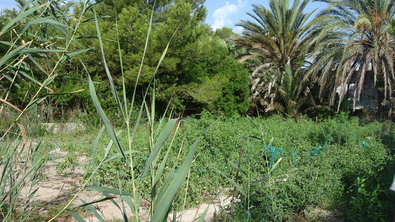 Sunny plot for sale in Talamanca