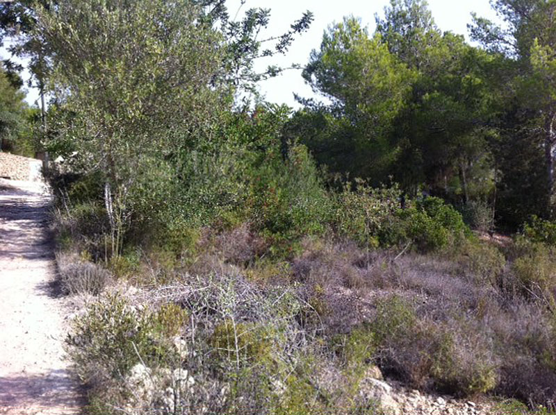 Large land in Santa Eulalia Siesta for sale