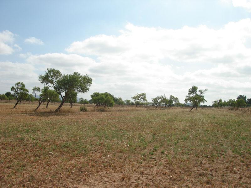 Large plot in San Augustine San José for sale