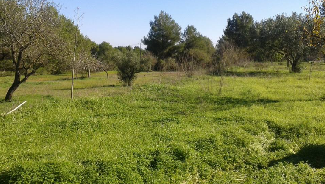 The last finca with very large plot of 46.000 m2
