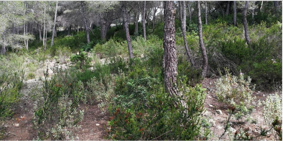Land with authorizaition and project Cala Salada