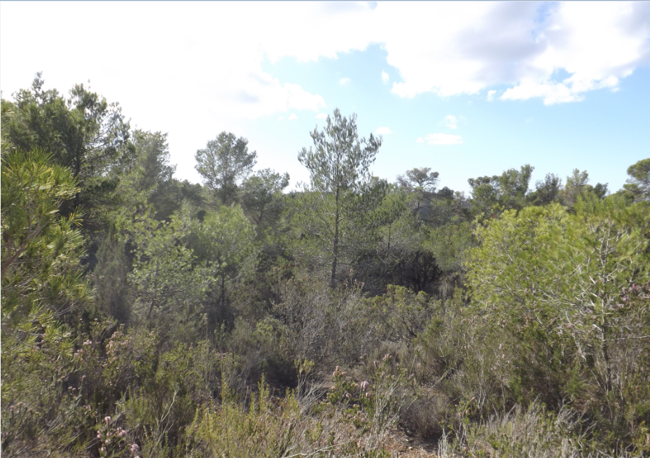Plot with licence to build a modern Villa with 500m2 in Cala Tarida