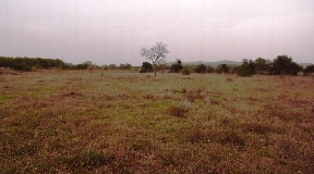 Land on Ibiza of over 15.000m2 for sale