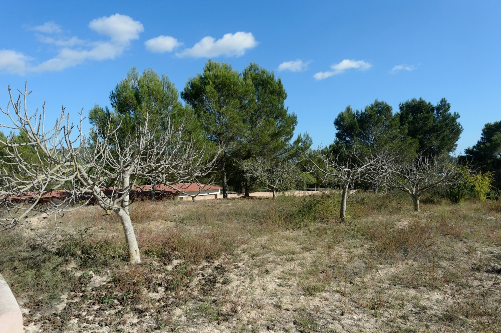 New build villa in Santa Gertrudis with large land in the middle of nature
