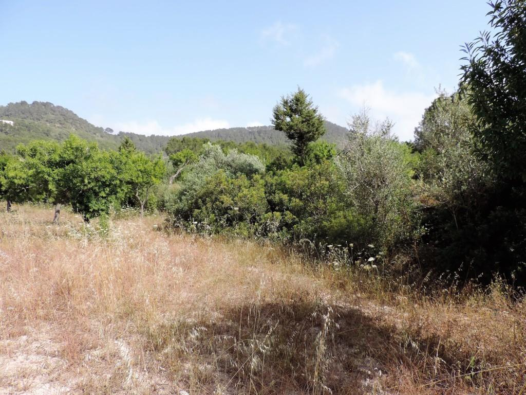 Spectacular Ibizan estate with a land of 73000m2