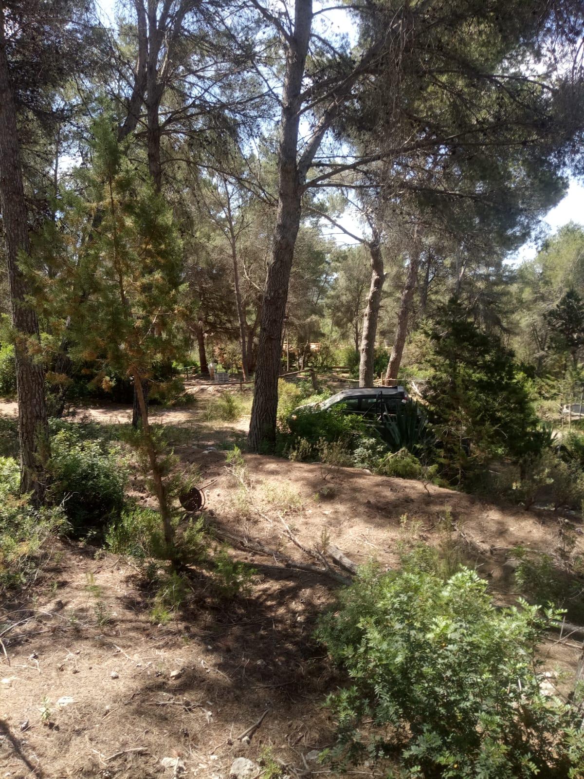 Finca in between Santa Gertrudis  and San Lorenzo,