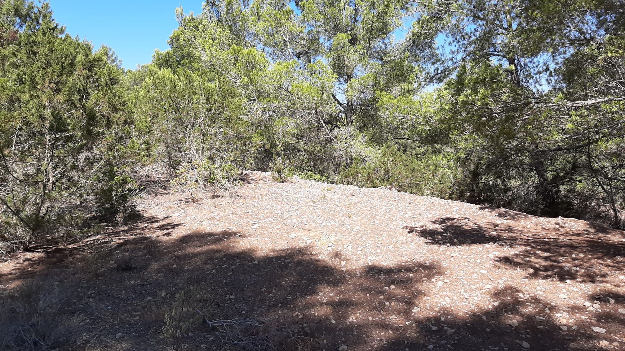Large plot in the west area of 49.000m2 with license near Cala Tarida