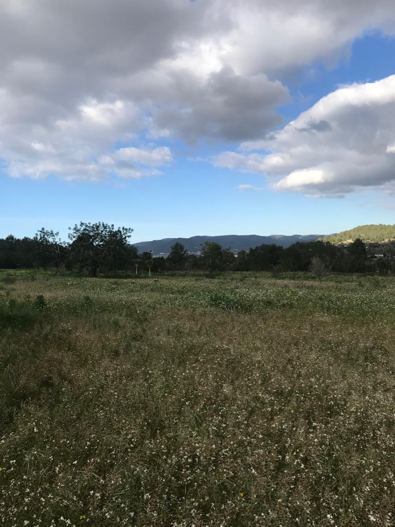 Land for sale in Benimussa with project and licence on his way