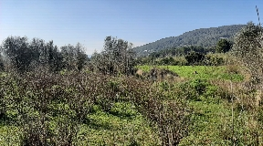 Rustic land of 15600m2 in the countryside between San Joan
