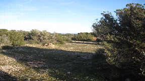 Plot with basic project approved for a single-family house with swimming pool in Cap de Barbaria Formentera